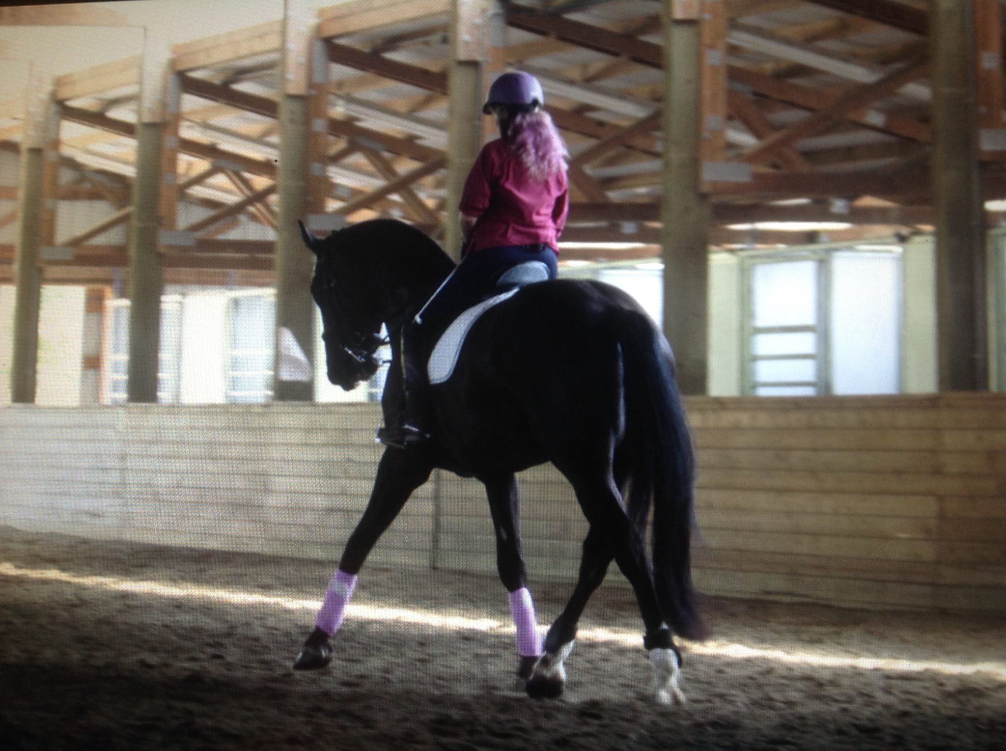 Care Acres Horse Training and Riding Instruction