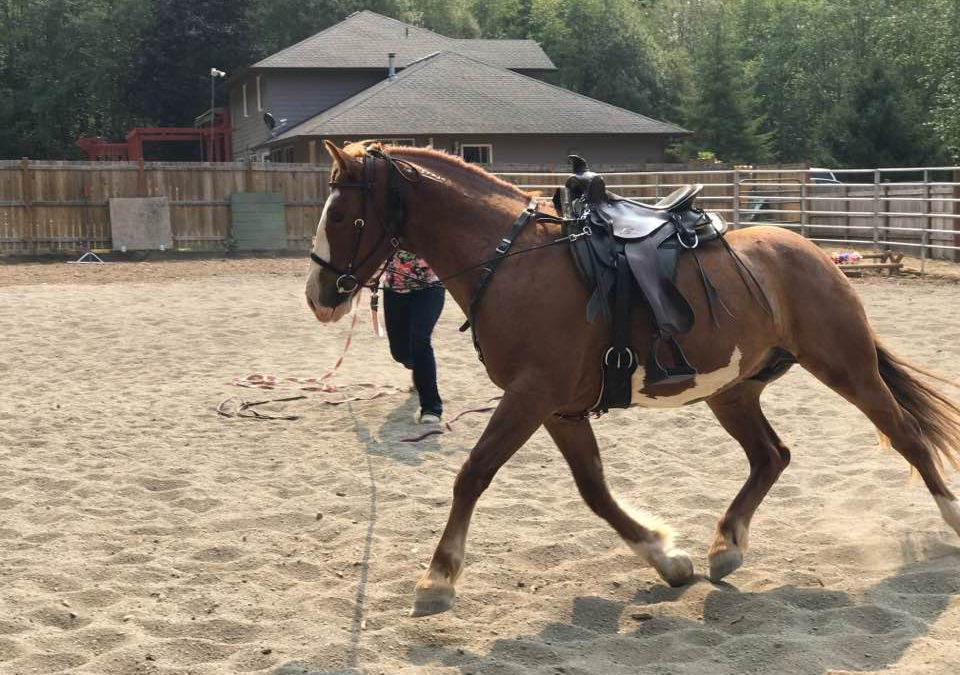 How To Correct Counter-Bend In A Horse