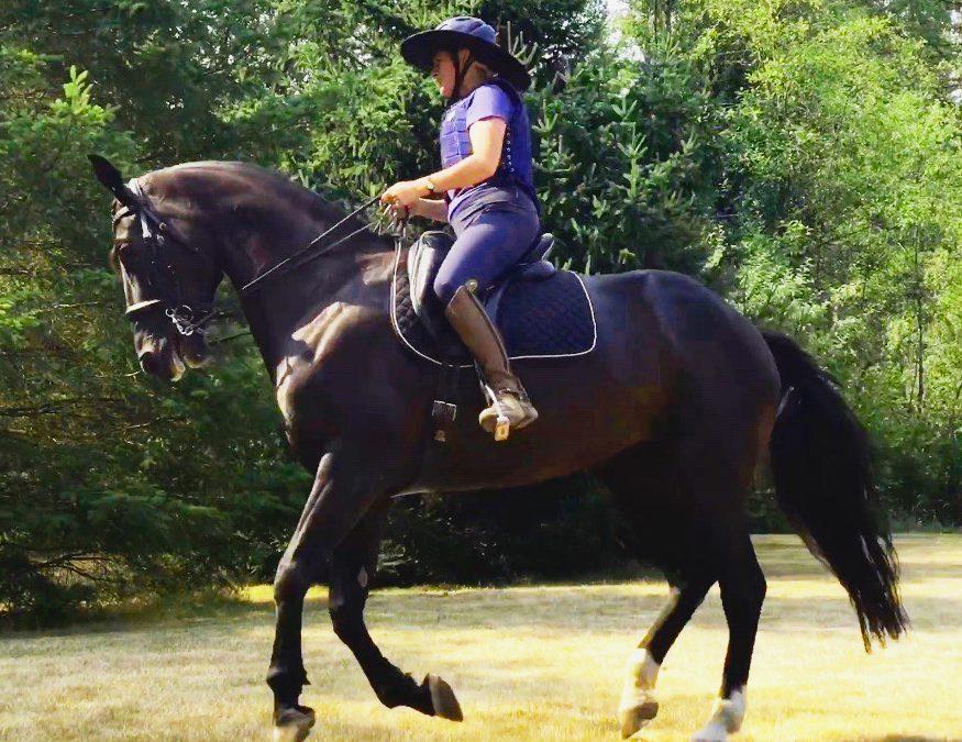 Good Riding Equals Good Horse
