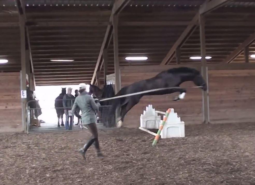Pearl Free jumping